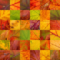 Patchwork of Autumn Leaves