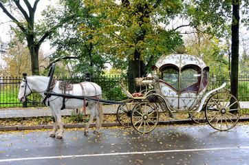 Карета, запряженная белой лошадью, на осенней улице