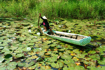 Asian farmer, pick water lily, Vietnamese food