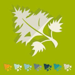Flat design: parsley, dill