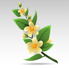 Spring of jasmine