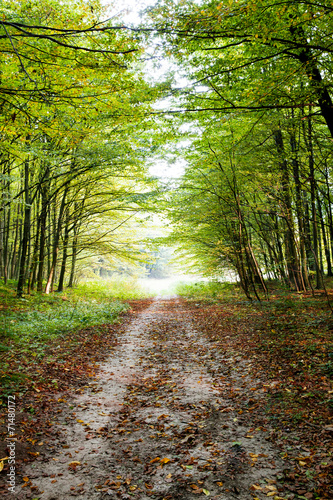 Nature. Beautiful morning scene in the forest - 71480172