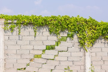 cracked wall with green plants