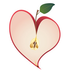 apple as  heart
