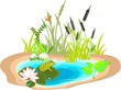 Pond with green frog and reeds - 71482177