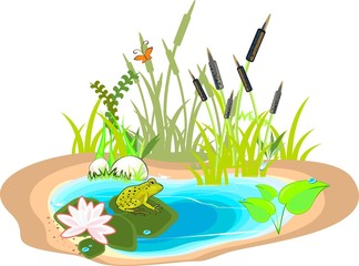 Pond with green frog and reeds