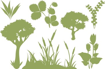 Silhouettes of plants
