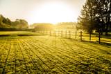 Sunrise over misty grassland     - Fine Art prints