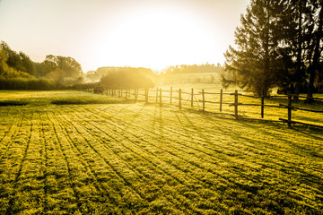 Sunrise over misty grassland