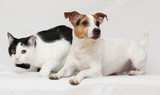 Nice dog with cat together on blanket - 71484961