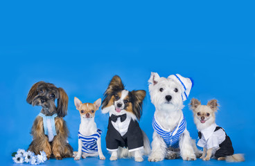 Different breeds of dogs on a blue background