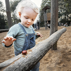 Little girl playing with a conker in the sandpit
