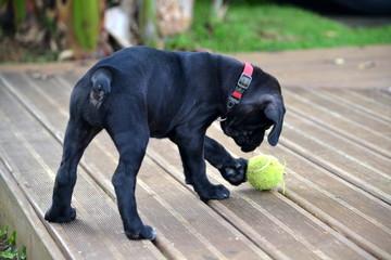 Jouer avec la balle