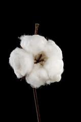 cotton on black