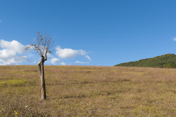 Tree in a field with blue sky. Sunny day in rural space