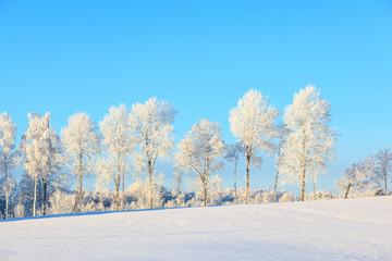 Frosty treeline in winter landscape