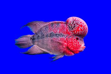 Flower róg ryb