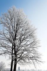 Landschaft mit Raureif, Frost und Schnee