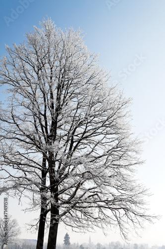 canvas print picture Landschaft mit Raureif, Frost und Schnee