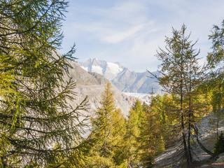 Riederalp, Riederfurka, Dorf, Silbersand, Aletschwald, Schweiz