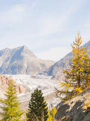 Riederalp, Dorf, Silbersand, Aletschwald, Gletscher, Schweiz