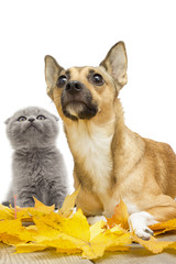 dog and cat in autumn