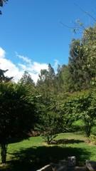 Cielo y bosque