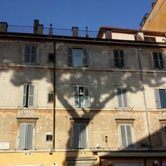 Un albero sul muro