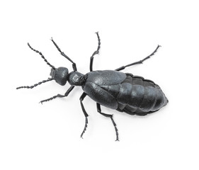 Beetle violet black on white background