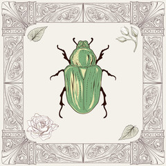 chafer beetle drawing