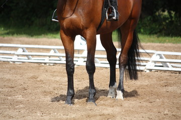 Close up of brown horse legs