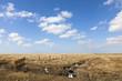 canvas print picture - Salzwiesen auf der Halbinsel Eiderstedt