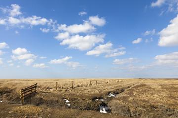Salzwiesen auf der Halbinsel Eiderstedt