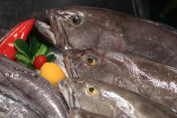 Details of the fresh bluefishes