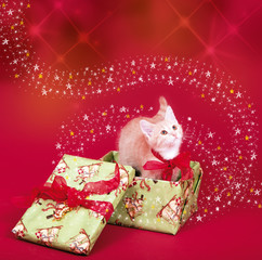 Katzenbaby im Weihnachtsgeschenk