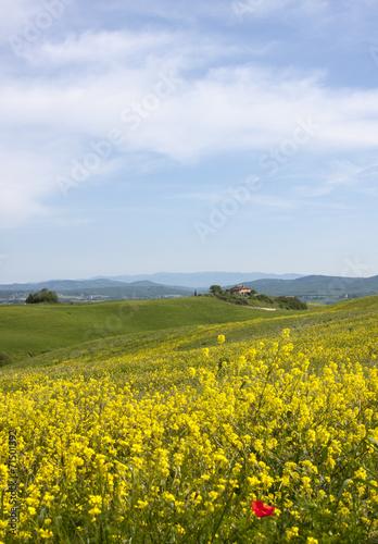 canvas print picture Toskana im Frühling