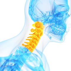medical 3d illustration of the cervical spine