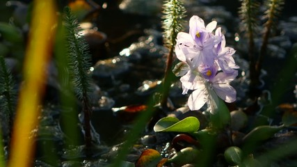 Beautiful Blue summer flowers close-up