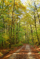 Autumn in a French forest