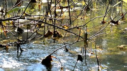 Reißender Fluss
