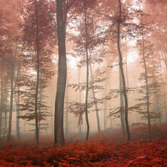 Fantasy autumn forest © robsonphoto