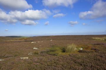 scenic moorland landscape