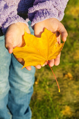 Yellow maple leaf in the hands of a child