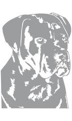 Cane Corso Hund