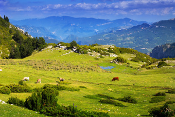 view of highland meadow with cows