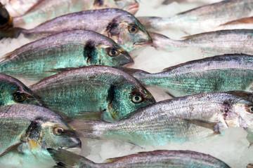 gilthead fish on  market counter