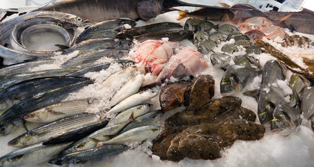 fish on mediterranean market counter