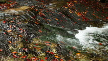 Autumnal  color leaves in cold mountain river
