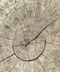 Weathered tree stump
