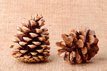 Pine cone on sackcloth background
